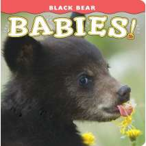 Baby Animals, Black Bear Babies!