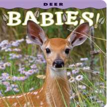 Baby Animals, Deer Babies!