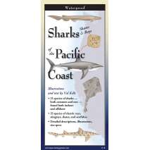 Fish & Sealife Identification Guides, Sharks, Skates & Rays Of The Pacific Coast