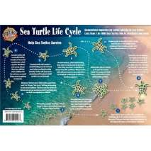 Fish & Sealife Identification Guides, Sea Turtle Life Cycle LAMINATED CARD