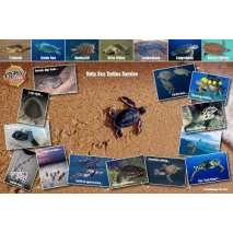 Sea Turtle Life Cycle LAMINATED CARD