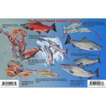 Fish & Sealife Identification Guides, Pacific Northwest Salmon Lifecycle & Identification LAMINATED CARD