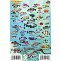 Pacific Northwest Ocean & Kelp Creatures Guide LAMINATED CARD
