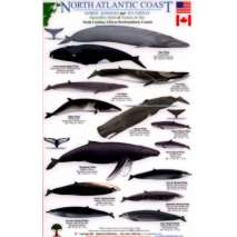Fish & Sealife Identification Guides, North Atlantic Coast: Marine Mammals and Sea Turtles North Carolina, USA to Newfoundland, Canada