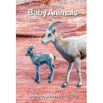 Baby Animals, Our Arizona: Baby Animals