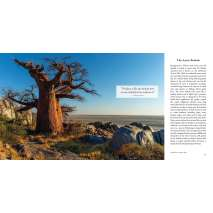 Conservation & Awareness :In the Company of Trees: Honoring Our Connection to the Sacred Power, Beauty, and Wisdom of Trees