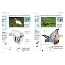 Birds :Encyclopedia of Birds