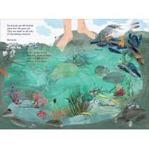 Ocean & Seashore :The Big Sticker Book of the Blue
