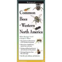 Insect Identification Guides :Common Bees of Western North America