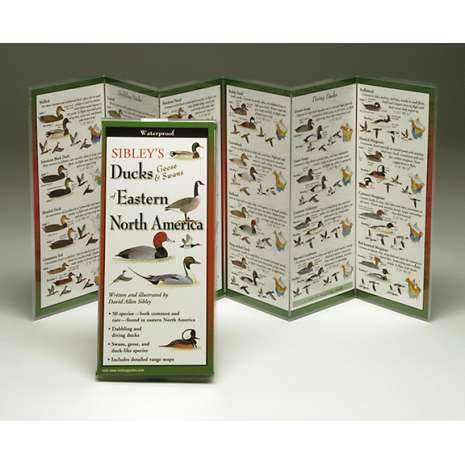 Bird Identification Guides, Sibley's Ducks, Geese & Swans of Eastern North America (Folding Guides)