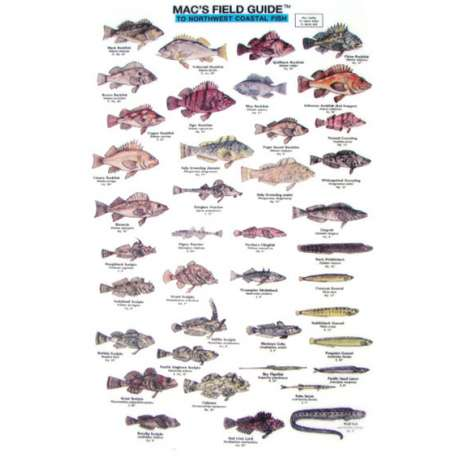 Books for Aquarium Gift Shops :Northwest Coastal Fish  (Laminated 2-Sided Card)