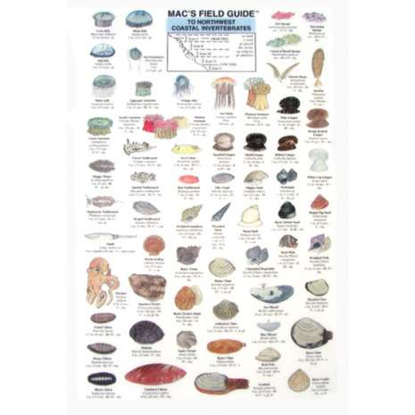 Books for Aquarium Gift Shops :Northwest Coastal Invertebrates   (Laminated 2-Sided Card)