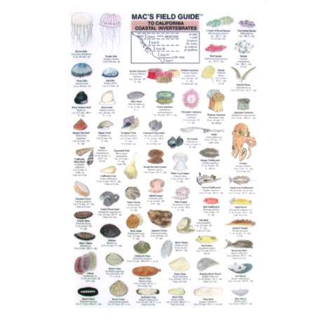 Aquarium Gift Shops, California Coastal Invertebrates  (Laminated 2-Sided Card)