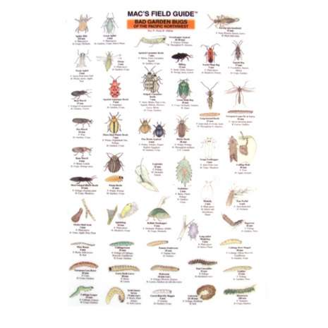 Insect Identification Guides :Northwest Garden Bugs  (Laminated 2-Sided Card)