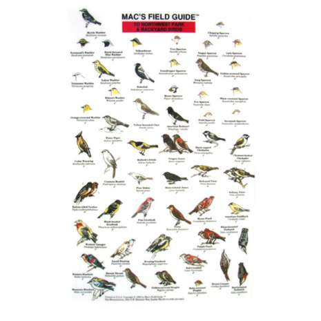 Pacific Northwest Field Guides :Northwest Park and Backyard Birds  (Laminated 2-Sided Card)
