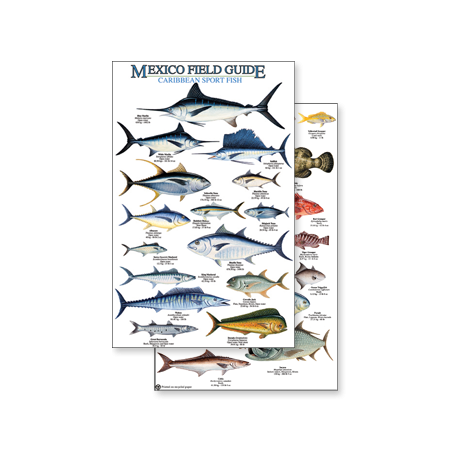 Fish & Sealife Identification Guides :Mexico: Caribbean Sport Fish (Laminated 2-Sided Card)
