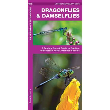 Insect Identification Guides :Dragonflies & Damselflies