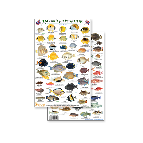 Fish & Sealife Identification Guides :Hawaii Reef Fish #2 (Laminated 2-Sided Card)