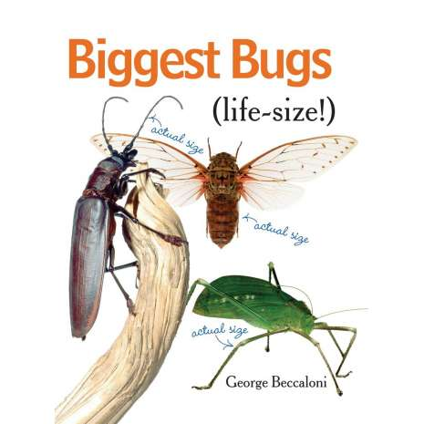 Butterflies, Bugs & Spiders :Biggest Bugs Life-Size