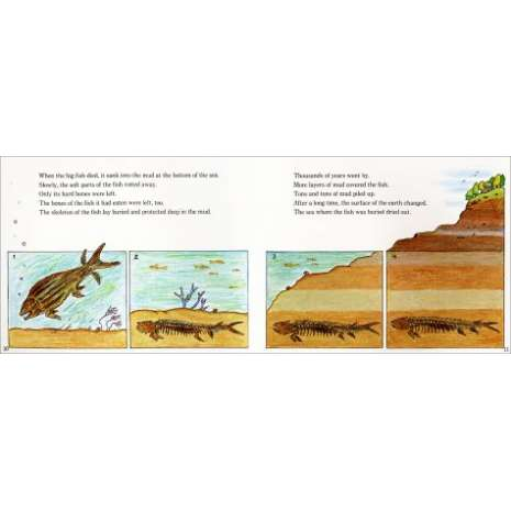 Rockhounding & Prospecting :Fossils Tell of Long Ago- Revised Edition