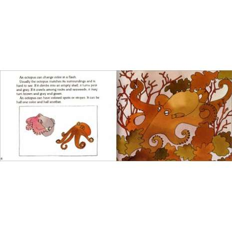 Fish, Sealife, Aquatic Creatures :An Octopus Is Amazing (Let's-Read-and-Find-Out Science, Stage 2)