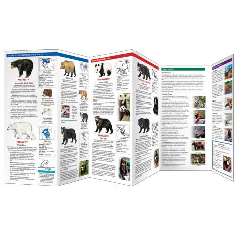 Other Field Guides :The World of Bears
