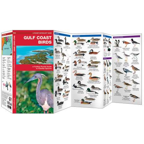 Bird Identification Guides :Gulf Coast Birds