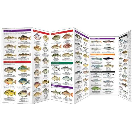 Fish & Sealife Identification Guides :Freshwater Fishes