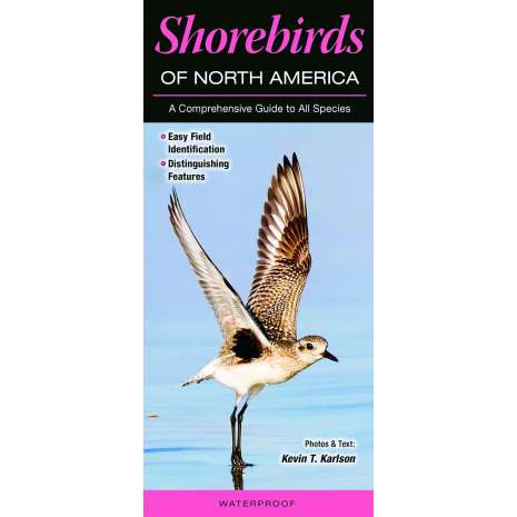Bird Identification Guides :Shorebirds of North America