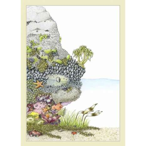 Beachcombing & Seashore Field Guides :Fylling's Illustrated Guide to Pacific Coast Tide Pools
