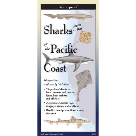Fish & Sealife Identification Guides :Sharks, Skates & Rays Of The Pacific Coast