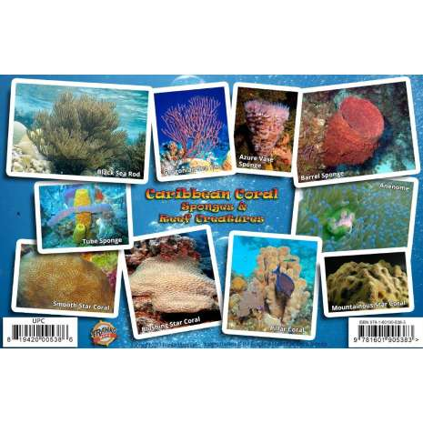 Fish & Sealife Identification Guides :Caribbean Coral Identification Guide LAMINATED CARD