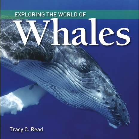 Marine Mammals, Exploring the World of Whales