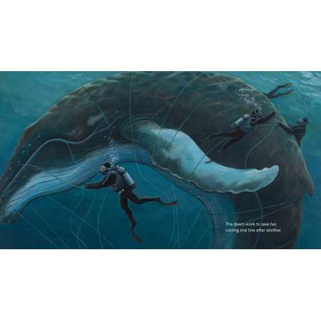 Marine Mammals, The Eye of the Whale: A Rescue Story