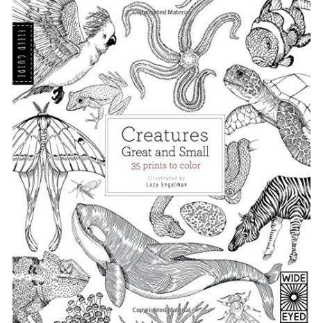 Adult Coloring Books, Field Guide: Creatures Great and Small: 35 prints to color