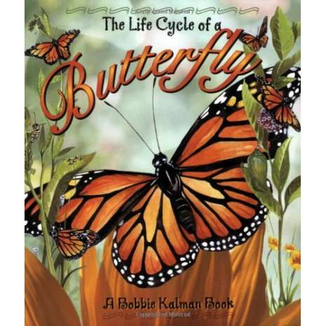 Butterflies, Bugs & Spiders, The Life Cycle of a Butterfly