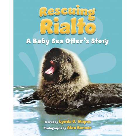Marine Mammals, Rescuing Rialto: A Baby Sea Otter's Story