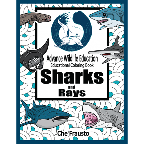 Sharks, Sharks and Rays Educational Coloring Book
