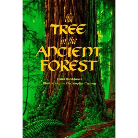 Environment & Nature :The Tree in the Ancient Forest