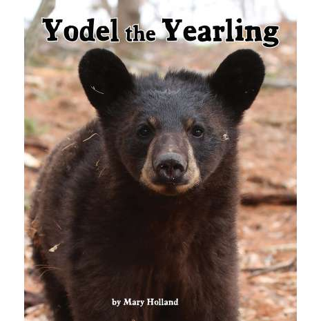 Bears, Yodel the Yearling