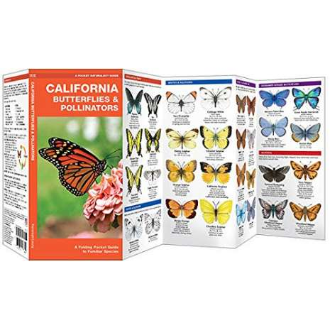 Insect Identification Guides :California Butterflies & Pollinators: A Folding Pocket Guide to Familiar Species