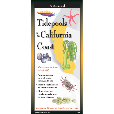 California :Tidepools of the California Coast