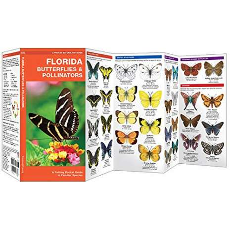 Insect Identification Guides :Florida Butterflies & Pollinators: A Folding Pocket Guide to Familiar Species
