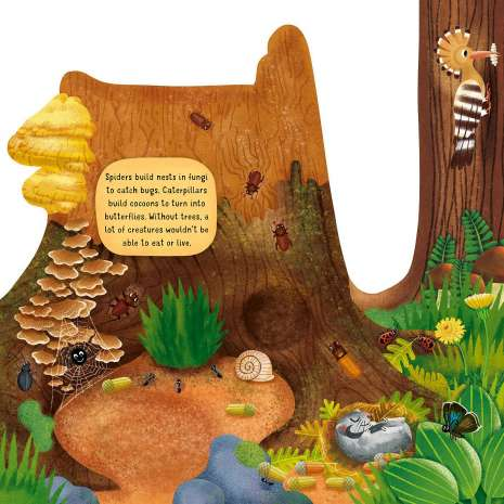 Board Books :Discovering the Hidden Woodland World