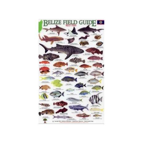 Fish & Sealife Identification Guides :Belize Field Guide, Reef Fish (Laminated 2-Sided Card)