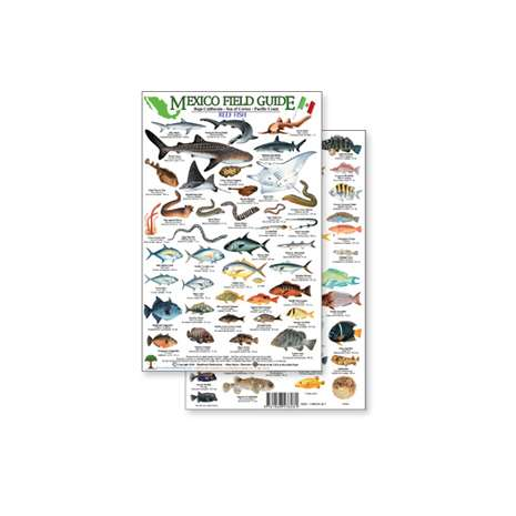 Fish & Sealife Identification Guides :Mexico Field Guide: Baja, Sea of Cortez Reef Fish (Laminated 2-Sided Card)