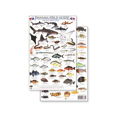 Fish & Sealife Identification Guides :Panama Pacific Reef Fish (Laminated 2-Sided Card)