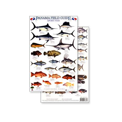 Fish & Sealife Identification Guides :Panama Sport Fish (Laminated 2-Sided Card)