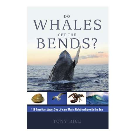 Ocean & Seashore :Do Whales Get the Bends?