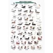 Birding :Northwest Coastal Water Birds  (Laminated 2-Sided Card)